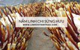 LINHCHITIENTHAO.COM (1)