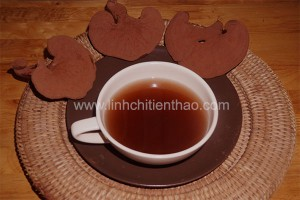 trà nấm linh chi đỏ