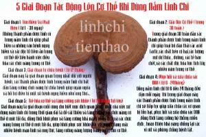 5-giai-doan-tac-dong-len-co-the-khi-dung-nam-linh-chi