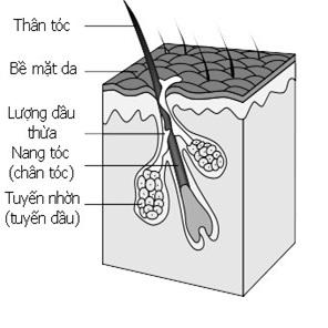 dieu-tri-rung-toc-bang-nam-linh-chi