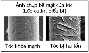 ngan-ngua-rung-toc-bang-nam-linh-chi