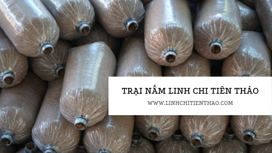 lam-sao-biet-duoc-chat-luong-that-su-cua-nam-linh-chi